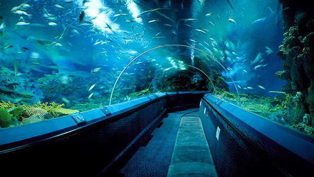 徜徉海洋水族馆:酒店附近的2号线10分钟即达上海海洋